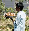 Vendor selling coconut slices to motorists in traffic, Delhi