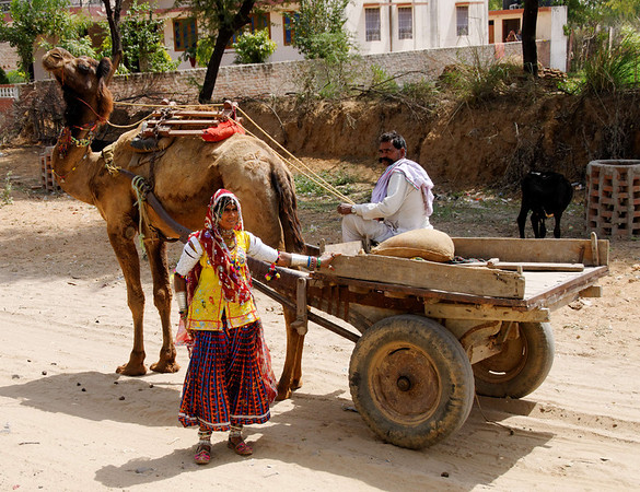 """Lends new meaning to the phrase """"Family Jewels"""", on the road to Ranthambore"""