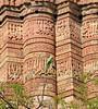 Green Parrot, Qutub Minar, Delhi