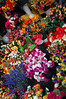 Fresh flowers in the open market Sestri Levante, Italy