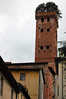 Guinige Tower, Lucca - yes, that's a live tree Lucca, Italy