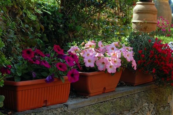 Flowers through a fence, small village near Genova & Lavagna San SAlvatore di Cogorno, Italy