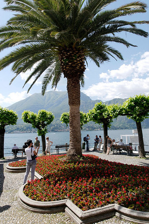 palm and begonias on Bellagio waterfront