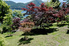 Japanese maple and others