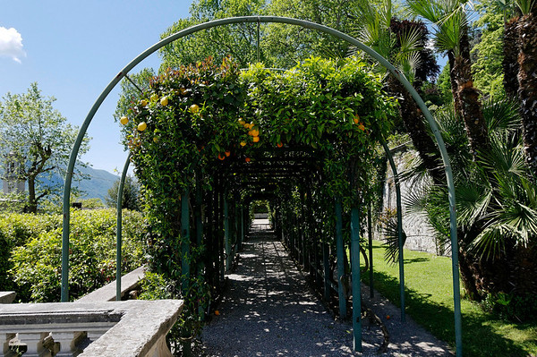 long arbor of citrus and jasmine - very fragrant