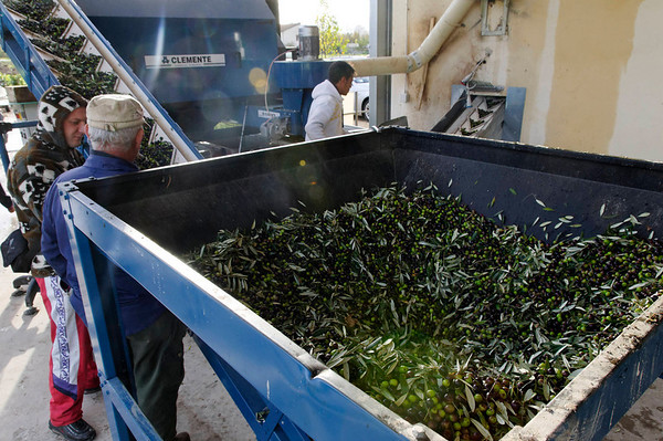 Maria took a load of olives to be processed, this is the separator_DSC8623