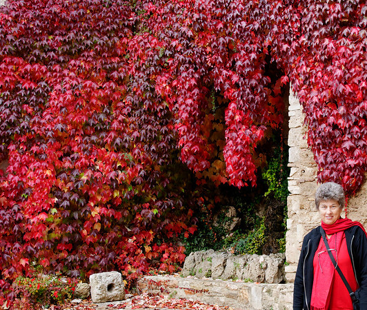 Suzanne coordinates with the ivy_DSC8545
