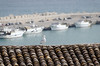 Seagull on roof, harbor, Sciacca Sicily
