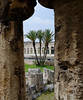 Temple of Apollo and palms, Syracuse Sicily