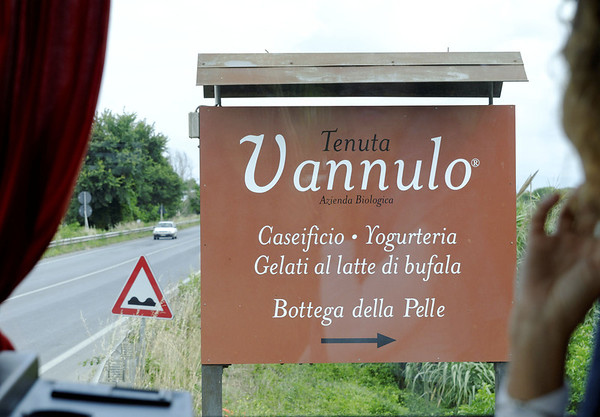 Tenuta Vannulo, organic milk farm, where we tasted fresh mozzarella cheese (from water buffalo milk) and saw the highly automated milking operation, near Paestum Italy