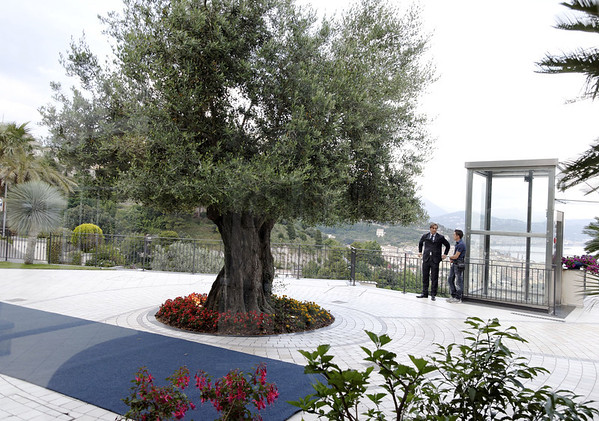 Old olive tree and elevator, Hotel Raito, Italy