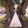 Lecce, Piazza Saint'Oronzo, ancient split olive tree