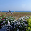 Polignano a Mare to Bari airport, trulli ruins in fields