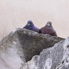 Ostuni, doves watching us