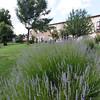 Calabria, La Rosa Nel Bicchiere Agriturismo, outside of Soveria Mannelli:  rooms and lavender