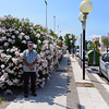 Barletta:  Richard and the ever-present and happy oleanders