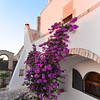 Masseria del Crocifisso:  the beautiful purple bougainvilla