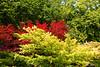 Valeggio, Parco Sigurta Giardino; Japanese maples