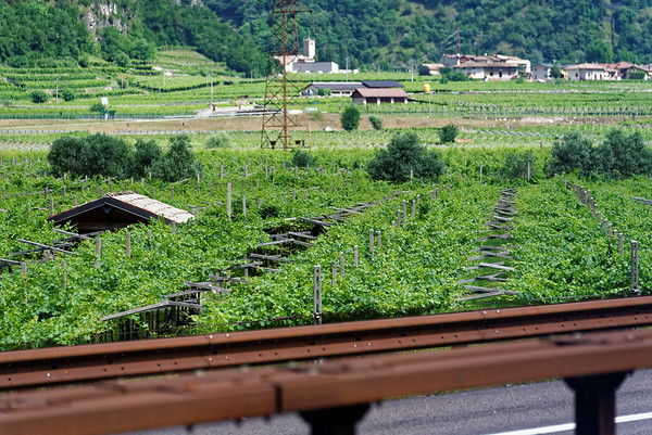 Lake Garda area; grapevines grown horizontally for maximum sun exposure in narrow alpine valleys, COR-TEN steel railings are designed to form a rust-colored coating and don't require painting or galvanizing