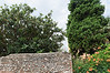 Verona; loquat tree and trumpet vine, two items that do well in Rockport