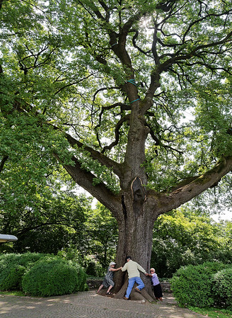 Valeggio, Parco Sigurta Giardino; Rena, Roy, Brant & Suzanne circle the 400 year old oak tree