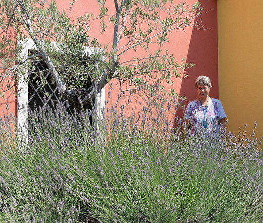 Ronca, La Casara; Suzanne, lavender and olive tree