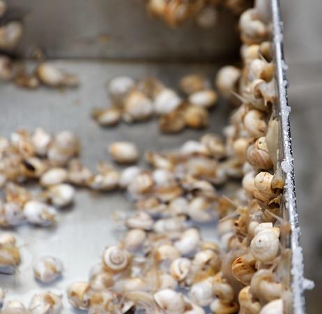 Venice; snails escaping