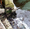 Venice; long term high water line indicated by mussels growing on step