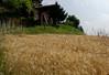Mondo Antico, Gaminara walk, wheat field below agriturismo