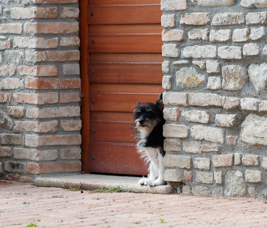 Mondo Antico, small dog giving us the eye