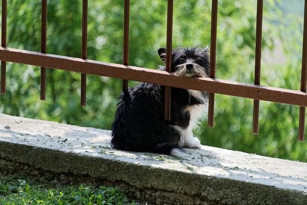 Mondo Antico, waiting for his master to return