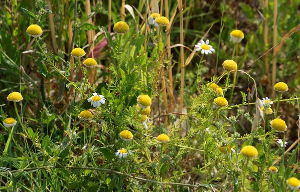 Mondo Antico, Gaminara walk, flowers