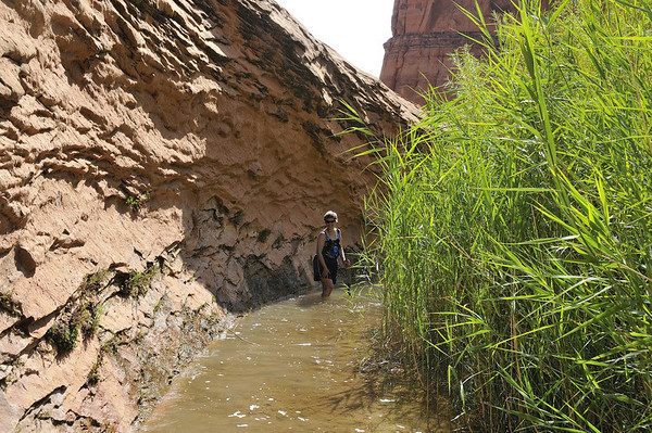 Suzanne, Sara, and I hiked back Llewellyn Gulch along the creek until it got too deep.