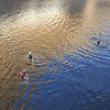 Early am swim - Adele, Darrel, Sara
