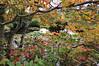 Asticou Azalea Garden, Northeast Harbor, ME