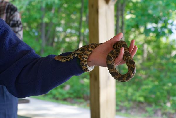 Killbear Park, snake gets warm