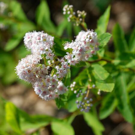 Killbear Park, lovely small flowers