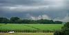 Louisiana sugar cane