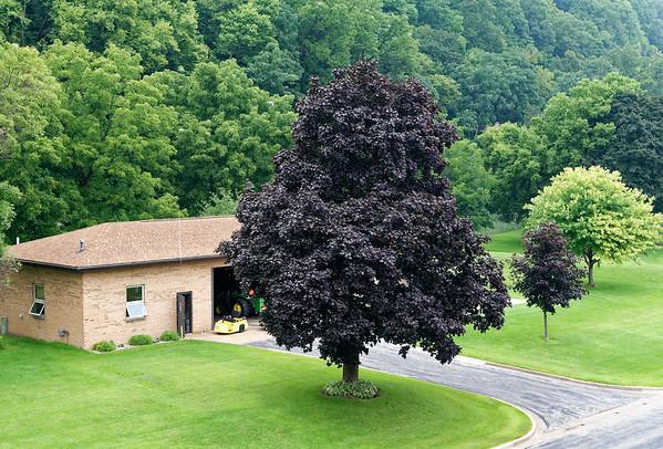 Lock 11, beautiful maple tree