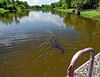 near Lake Bigeaux - feeding time over