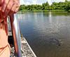 near Lake Bigeaux - here come the aligators