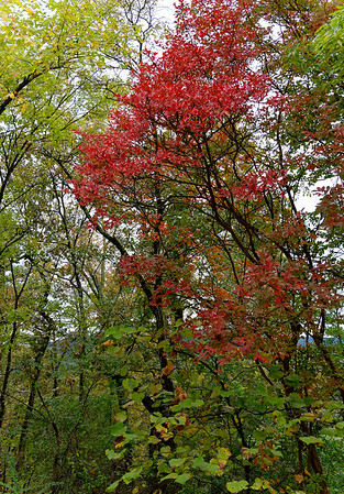 Hot Springs, AR, observation tower - fall foliage