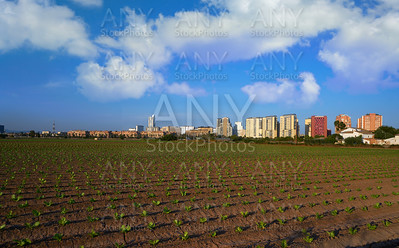 Valencia agriculture fields and skyline