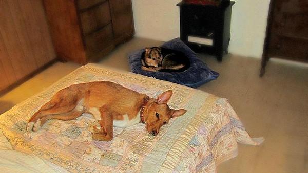 Multu Maddie in their new beds USA