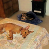 Multu Maddie in their new beds USA