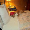 Multu in his new bed in America