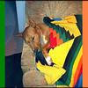 Multu blanket 3