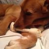 Multu ahhh bone