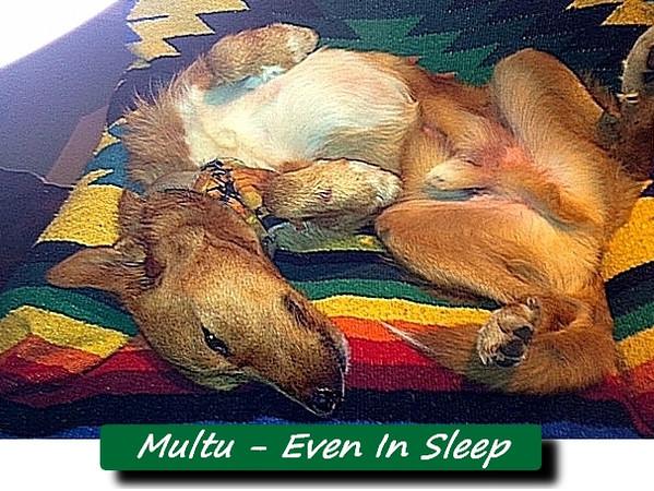 Multu sleep blanket FB22