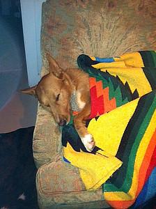 Multu blanket 2